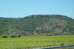 Wine yard in front of volcano-originated mountain.